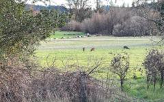 Take A Hike: Quail Hollow Ranch