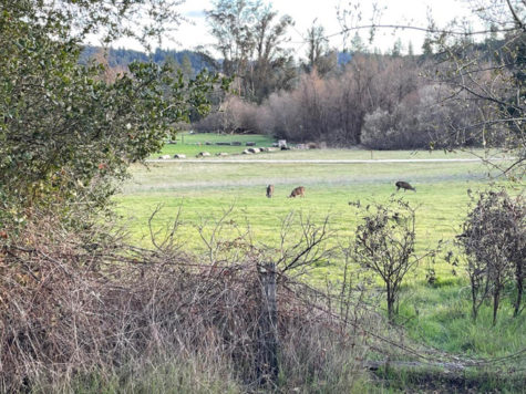 Take A Hike: Quail Hollow Ranch